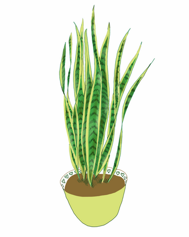 Snake Plant | Illustration by Wren McMurdo