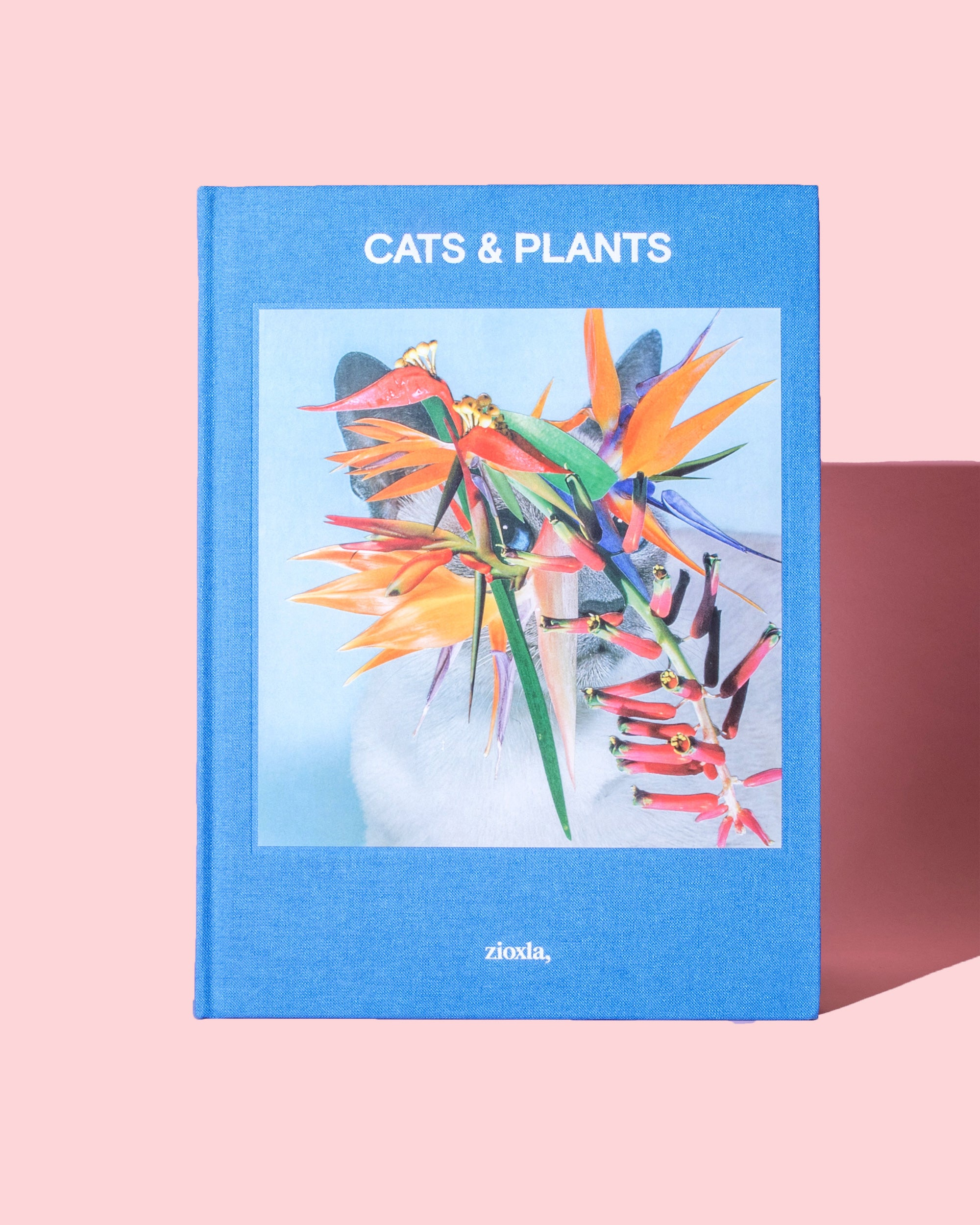 Cats & Plants by Stephen Eichhorn