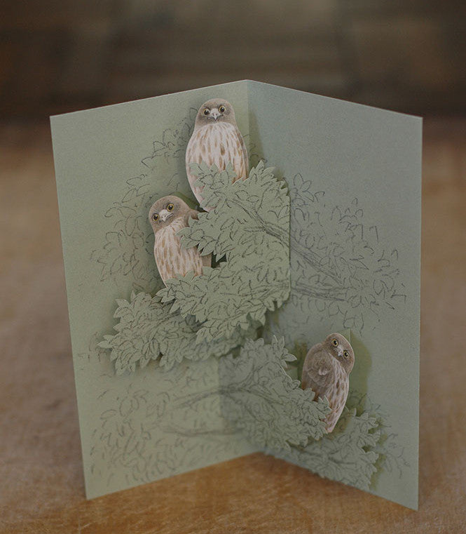 Tobidustry Pop-Up Bird Card {Brown Hawk Owl}