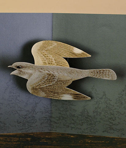 Tobidustry Pop-Up Bird Card {Grey Nightjar}