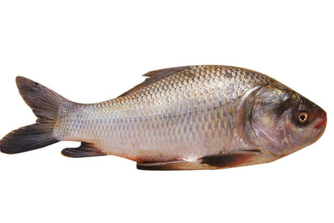 Catla Fish Bengali Cut