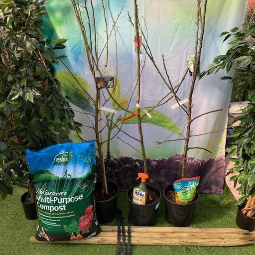 Mid Ulster Garden Centre (Hortus Vitae Ltd) Trees Premium Apple Tree Trio Bundle with all the Kit