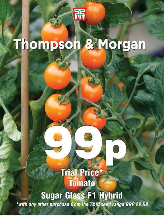 Thompson & Morgan (Uk) Ltd Gardening Tomato Sugar Gloss F1