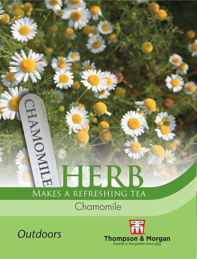 Thompson & Morgan (Uk) Ltd Gardening Herb Chamomile