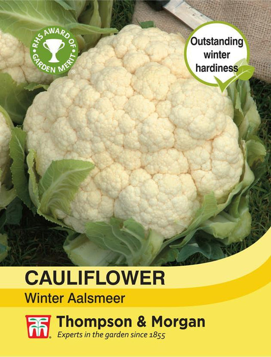 Thompson & Morgan (Uk) Ltd Gardening Cauliflower Winter Aalsmeer