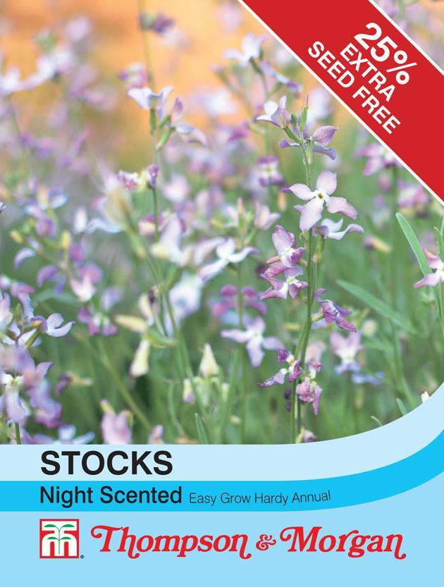 Thompson & Morgan (Uk) Ltd Gardening Stocks Night Scented