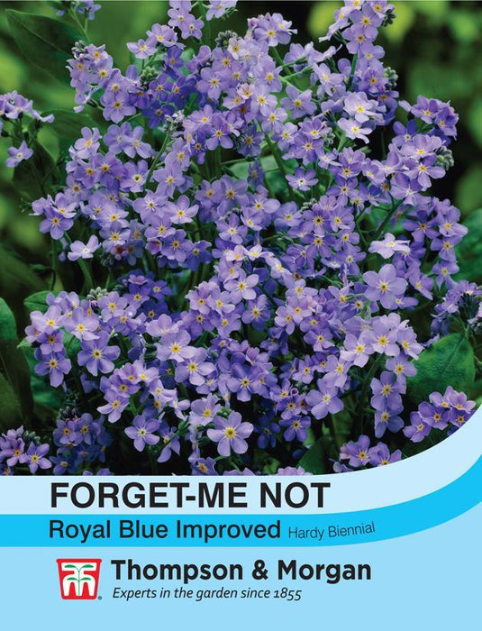 Thompson & Morgan (Uk) Ltd Gardening Forget-me-not Royal Blue Improved