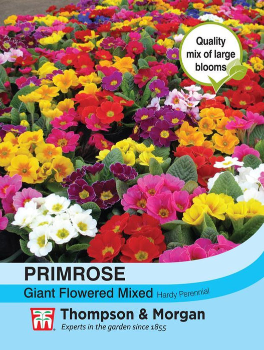 Thompson & Morgan (Uk) Ltd Gardening Primrose T&M Special Giant Flowered Mixed