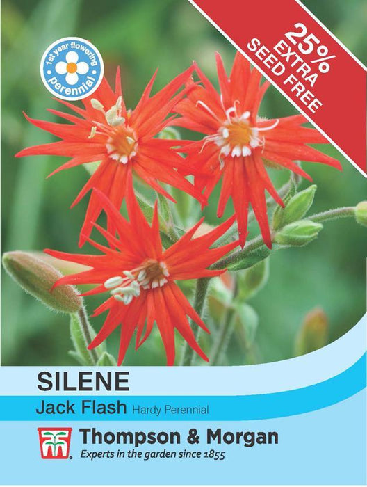 Thompson & Morgan (Uk) Ltd Gardening Silene Jack Flash