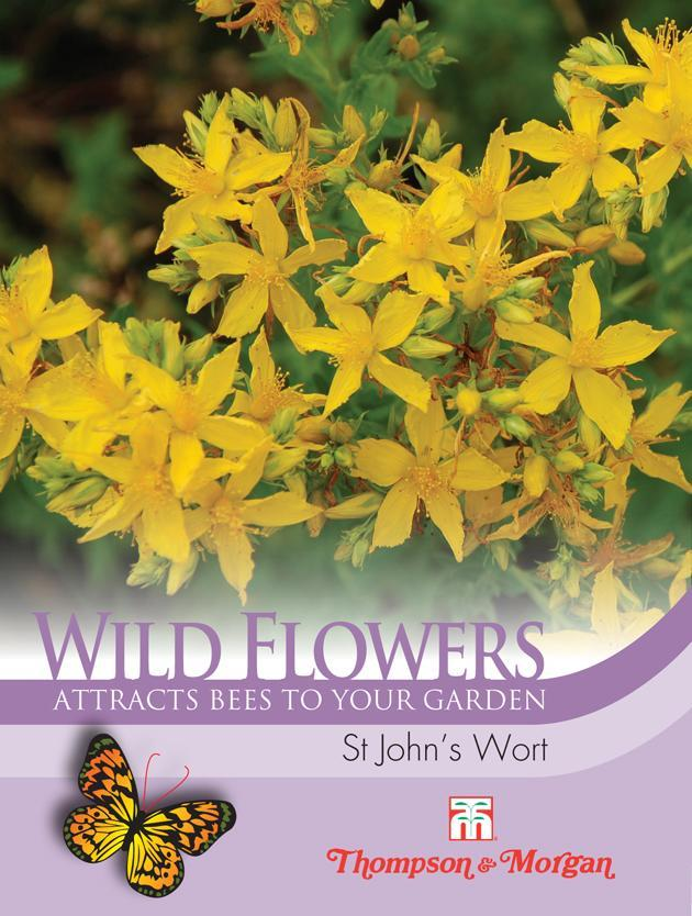 Thompson & Morgan (Uk) Ltd Gardening Wildflower St Johns Wort
