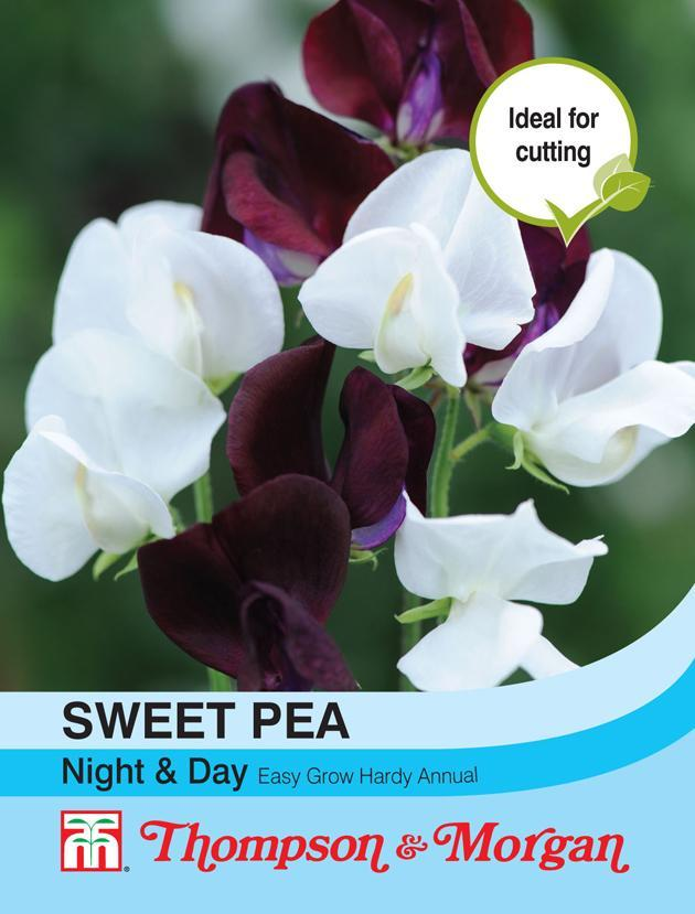 Thompson & Morgan (Uk) Ltd Gardening Sweet Pea Night & Day