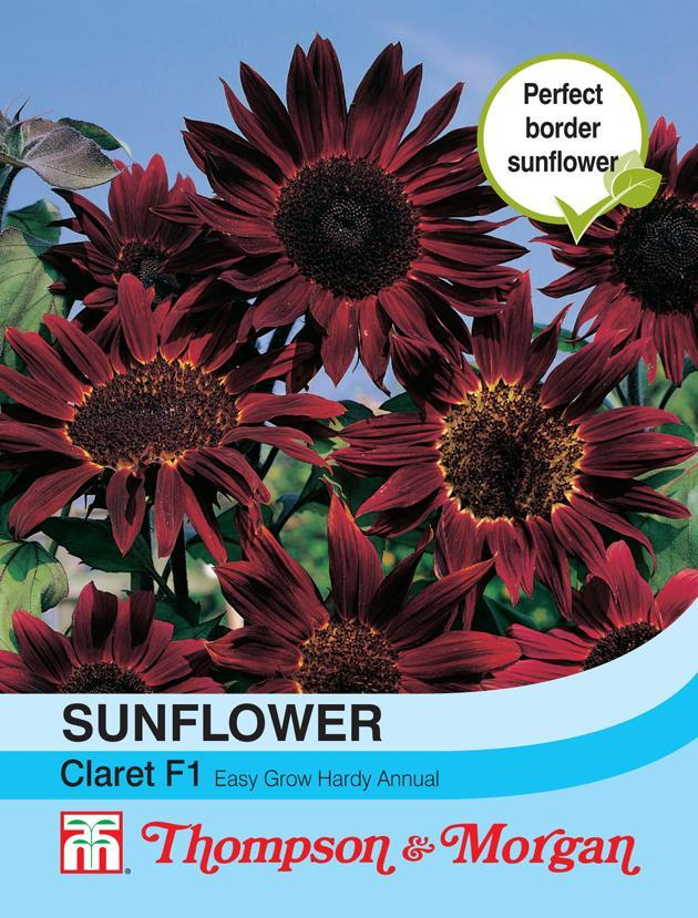 Thompson & Morgan (Uk) Ltd Gardening Sunflower Claret