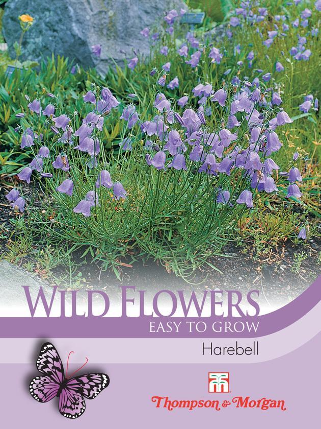 Thompson & Morgan (Uk) Ltd Gardening Wild Flower Harebell (Campanula Rotu)