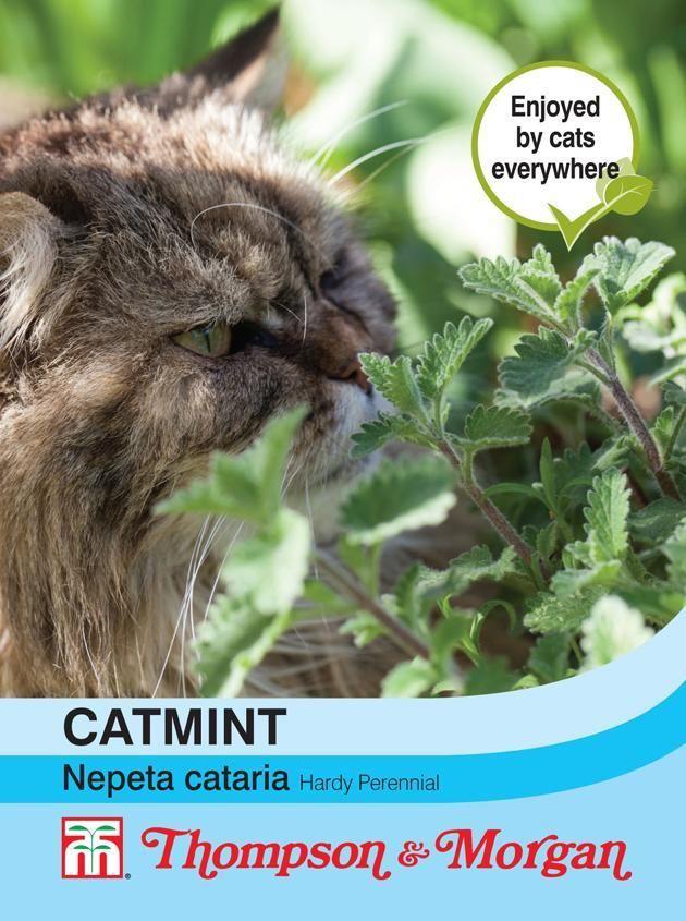 Thompson & Morgan (Uk) Ltd Gardening Catmint