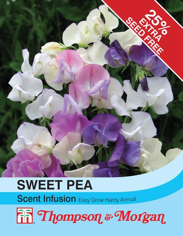 Thompson & Morgan (Uk) Ltd Gardening Sweet Pea Scent Infusion
