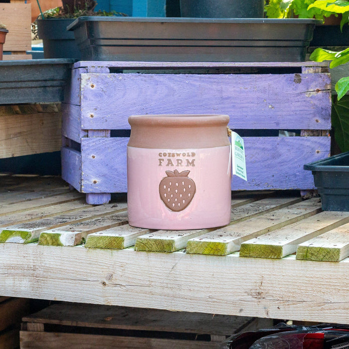 Mid Ulster Garden Centre Gardening Small Country Farm Style Ceramic Plant Pots In A Strawberry Cream Colour - 3 Sizes