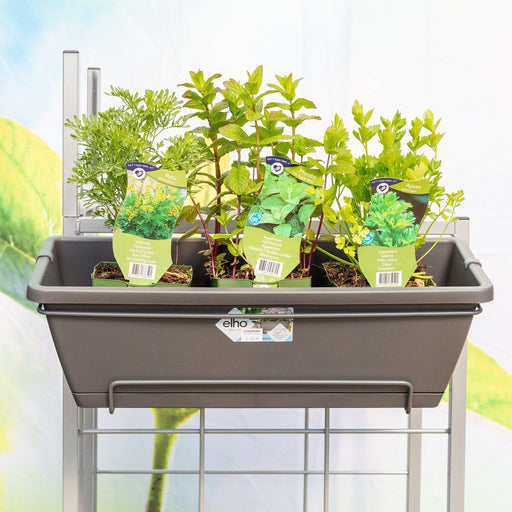 Mid Ulster Garden Centre Gardening Grey / Herb Trio Set One Elho Barcelona All-In-One Hanging Plant Pots With A Trio Of Herbs in Grey or Taupe
