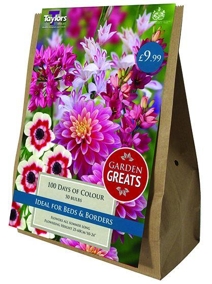 O.A. Taylor & Sons Bulbs Ltd Gardening 100 Days Of Colour