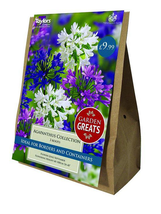 O.A. Taylor & Sons Bulbs Ltd Gardening Agapanthus Collection x3