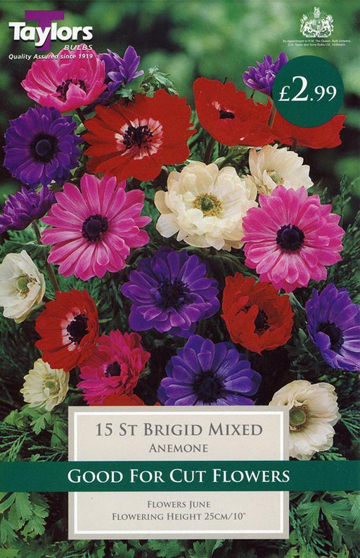 O.A. Taylor & Sons Bulbs Ltd Gardening Anemone St. Brigid Mixed 15