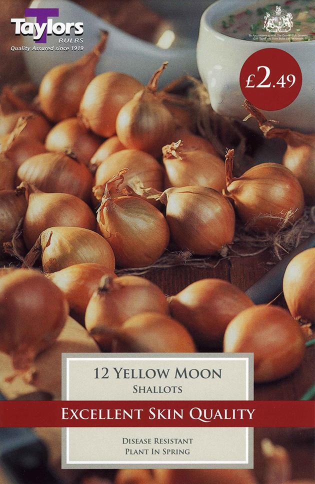 O.A. Taylor & Sons Bulbs Ltd Gardening Shallot Yellow Moon x12