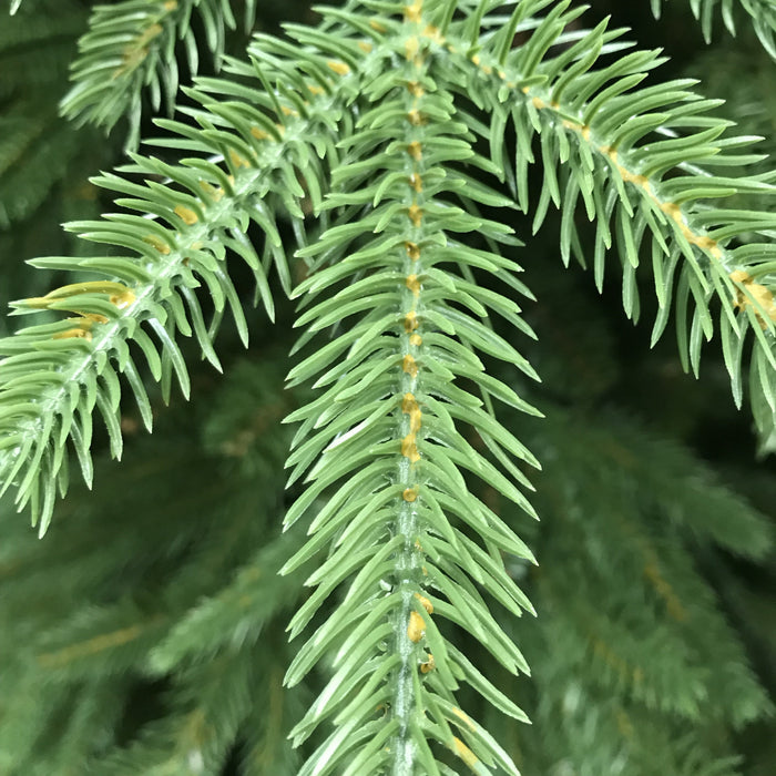 "National Tree Company ""Feel Real"" Monterey Fir Memory-Shape Christmas Tree 225cm / 7.5ft Feel Real Tip Detail - Mid Ulster Garden Centre, Northern Ireland"
