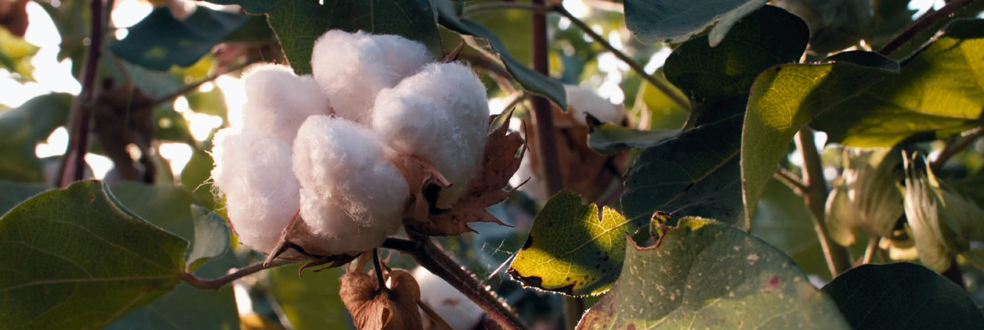 A Matter Of Fabrics: Organic Cotton