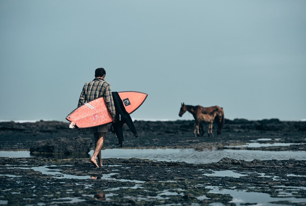 Sense of adventure: A surfer walks across an exposed rock shelf as horses search for food near by
