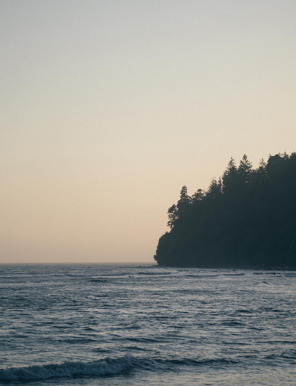 A classic Pacific North West scene with dense trees overhanging waves in the ocean.
