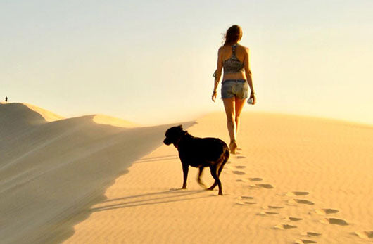 Wandering with a little black dog