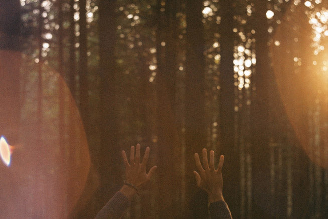 finding freedom in the forest