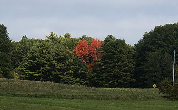 The Good Supply Midcoast Artisan Store Made in Maine USA Red Leaves in Fall
