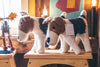 Mulxiply Hand Felted Stuffed Animals Puppy and Mom Dog Made in Nepal Fair Trade Supporting Womens Cooperatives