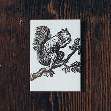 Letterpress Note Cards by Saturn Press are made in Maine, USA, on recycled paper. Squirrel
