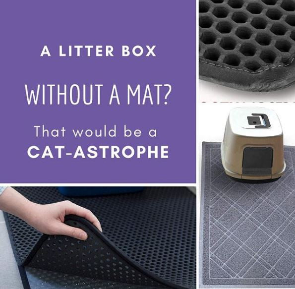 Cat Products Every Pet Owner Needs To Have