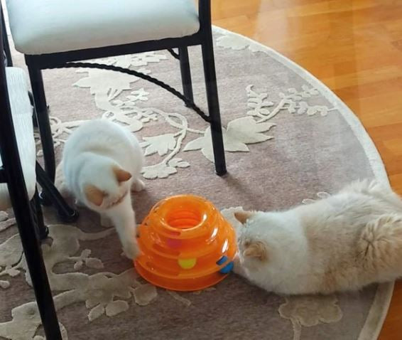 Best Cat Toys Available Online in USA