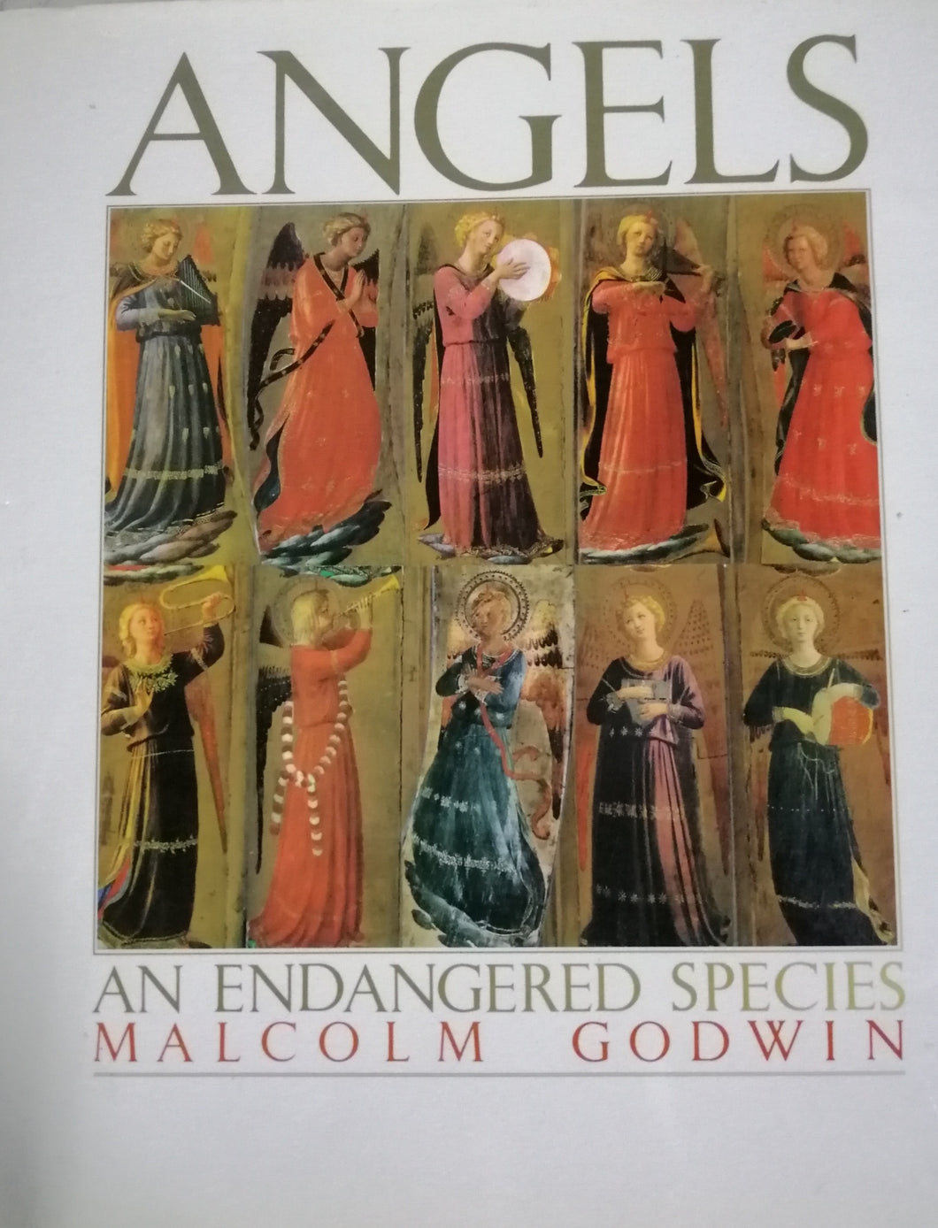 Angels anvendangered species by: Malcolm Godwin