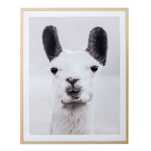 Amalfi | Lenny Llama Black & White Photography Framed Wall Decor
