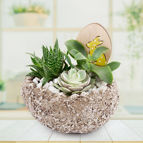 Easter Egg rock succulent arrangement. US and Canada Delivery
