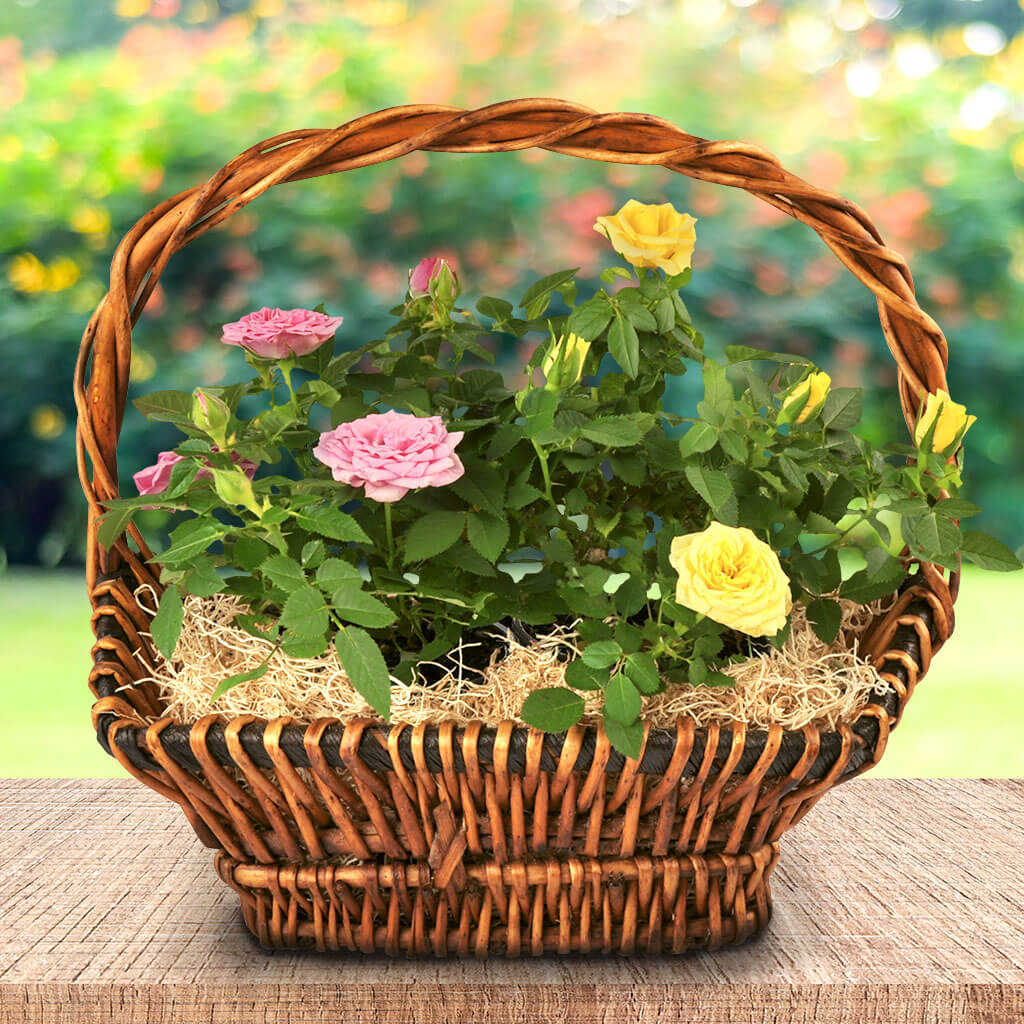 Miniature Rose Basket