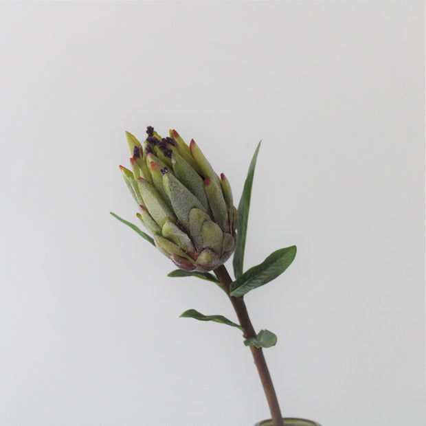 Tall Mink Protea Stem