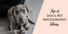 Top 12 Dog Photography and Pet Photography Ideas