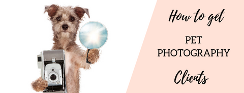 Pet photography marketing tips