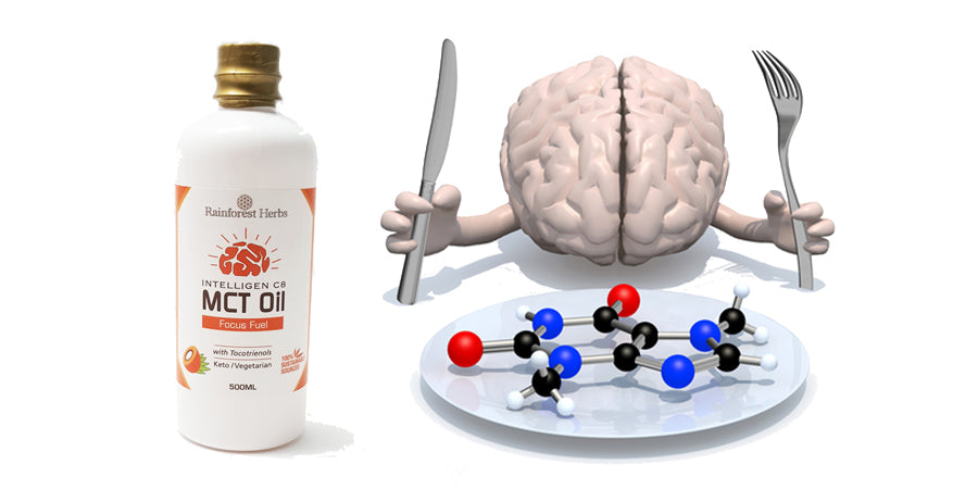 Can MCT Oil boost our brains?