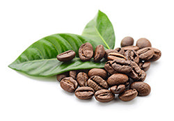 KetoCreme Coffee is made from premium Sumatran coffee beans