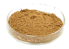 Tongkat Ali Extract Powder 60 grams - Rainforest Herbs