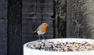 Robin on Green&Blue bird table