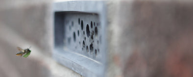 Leafcutter solitary bee flying to Bee Brick bee house to nest