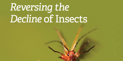 cover of the wildlife trusts report on reversing the decline of insects