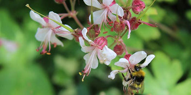 8 Ideas to Attract Bees to Your Garden